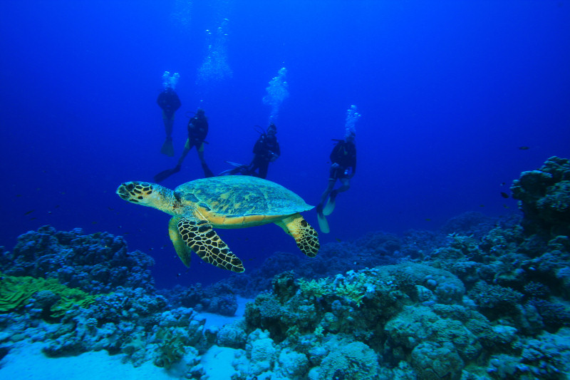Scuba Diving St. John USVI with sea turtles
